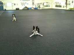 Recycled rubber flooring is the ideal dog friendly flooring