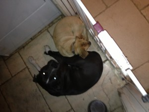 Heated foot warmer floor mats may work to keep these dogs warm.