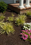 Landscaping Mulch Looks Great and Is Long Lasting!