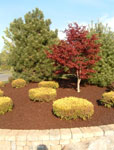 Rubber Mulch Ideal Replacement For Grass Lawns!